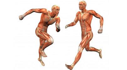 Skeletal System Functions